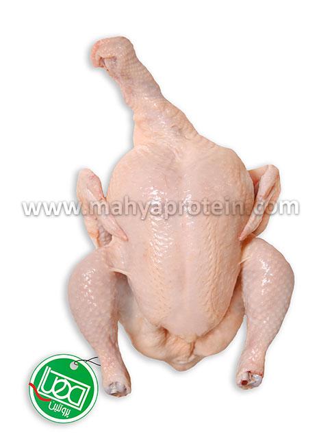 دجاجة كاملة