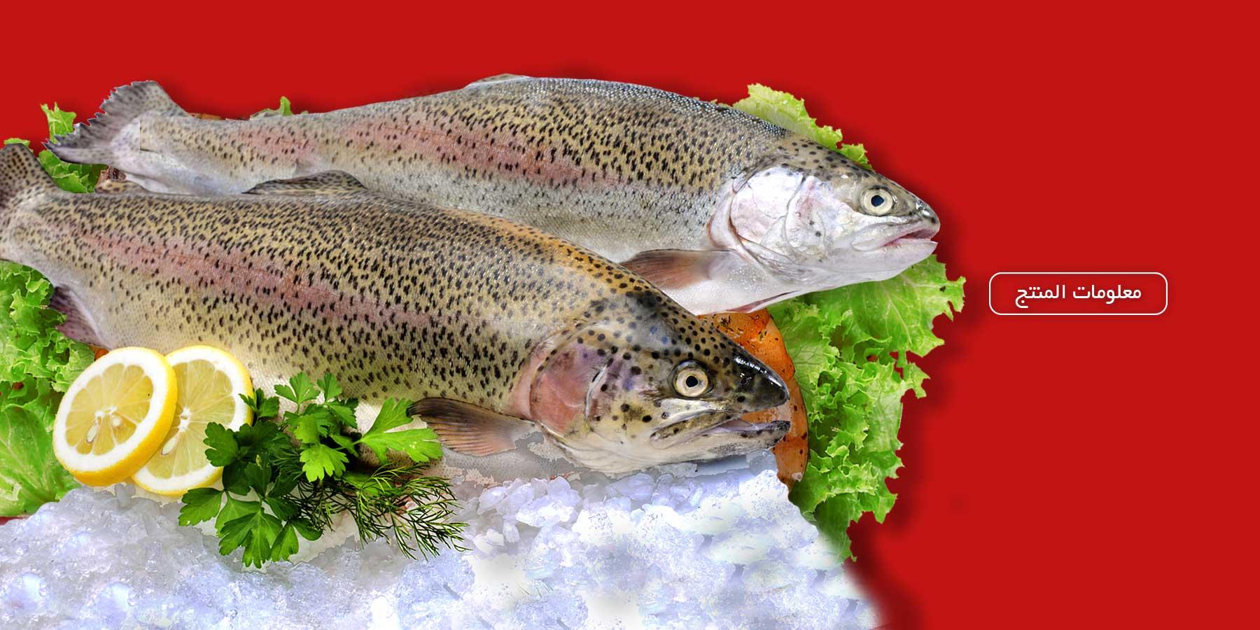 لحم السمك الطازجة والمجمدة مهیا بروتین